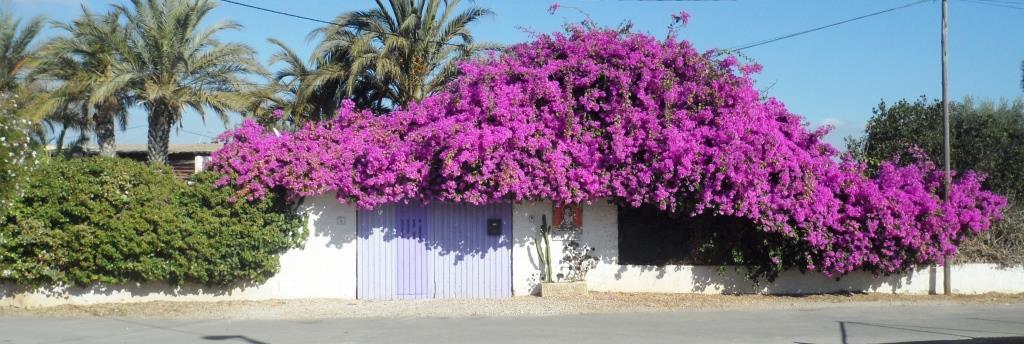 Spain Yoga Holiday at Tara Casa , Murcia  Saturday May 30th